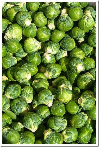400px-Brussels_sprout_closeup